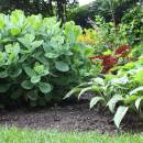Natuurlijke tuin